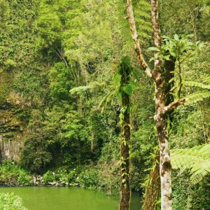 Waterfall Tour Cairns