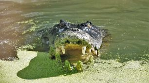 Hartley's Crocodile farm – half day