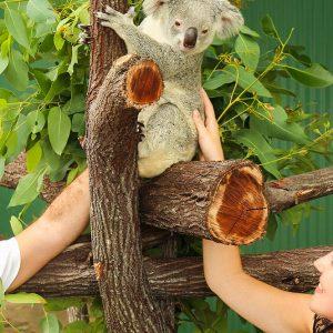 Port Douglas Zoo