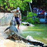 Cairns Attractions include the Great Barrier Reef, Daintree National Park, Quinkan Aboriginal Art, Chillagoe-Munagana Caves National Park, Hartleys Crocodile Adventures, Rainforestation Nature Park, Cairns Zoom and Wildlife Park and more