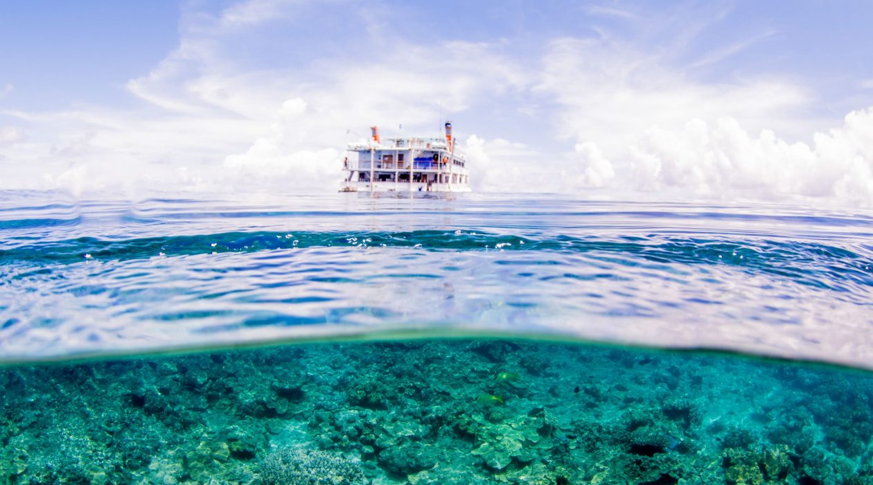 top 5 snorkelling tours Cairns
