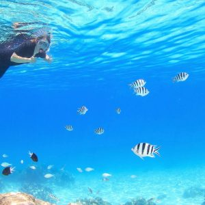 Cairns Top 5 Snorkelling Tours