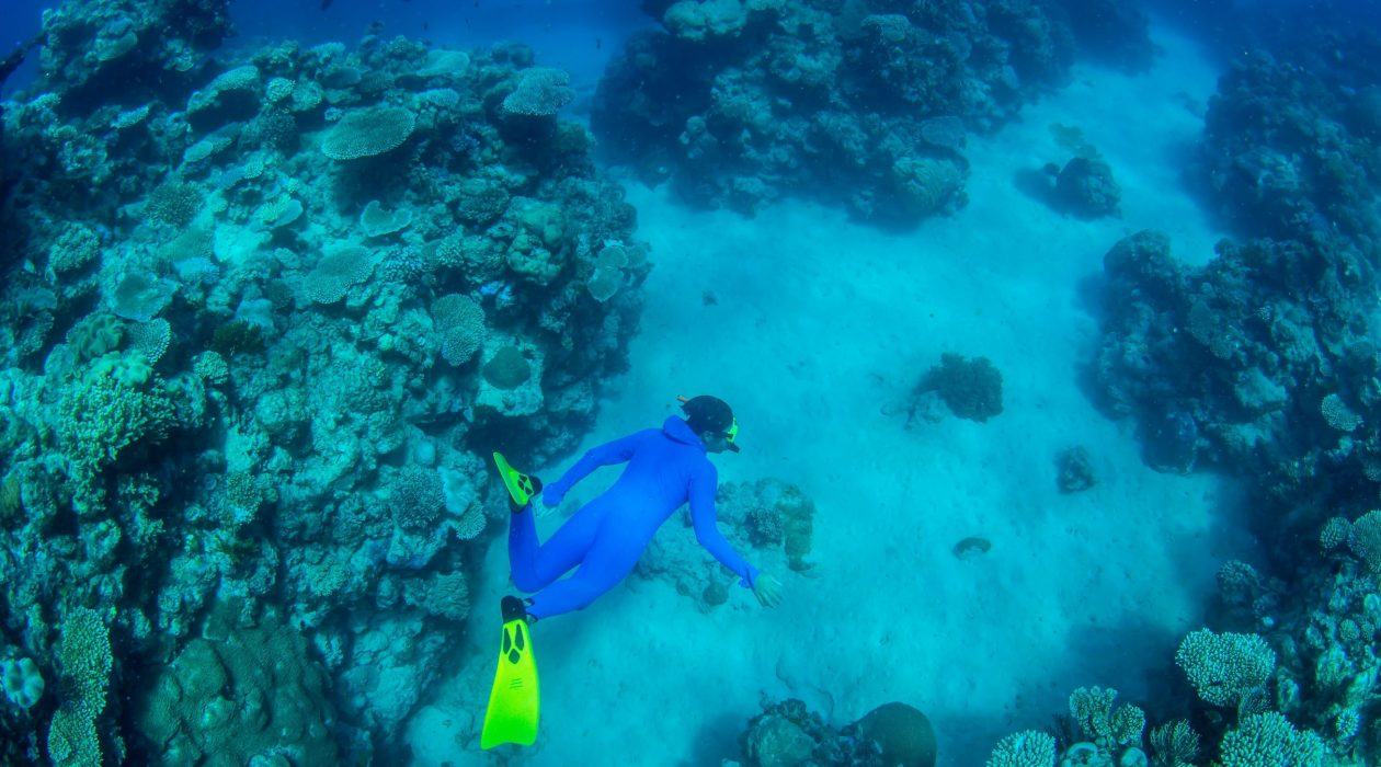top-5-great-barrier-reef-tours