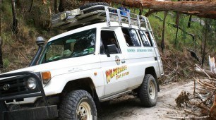 Wilderness Eco Safari Cairns North Queensland Australia