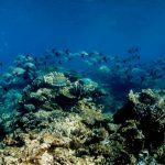 Great Barrier Reef Liveaboard & Rainforest