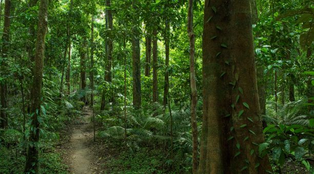 Walk through the ancient Daintree Rainforest at Mossman Gorge