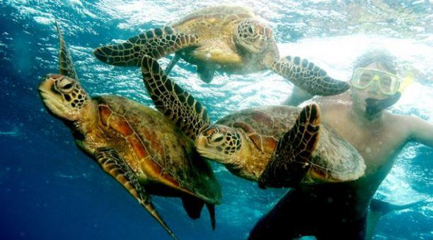 Snorkelling with sea turtles