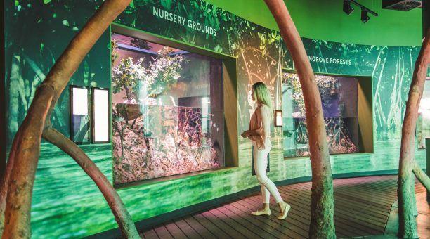 Mangroves Exhibit