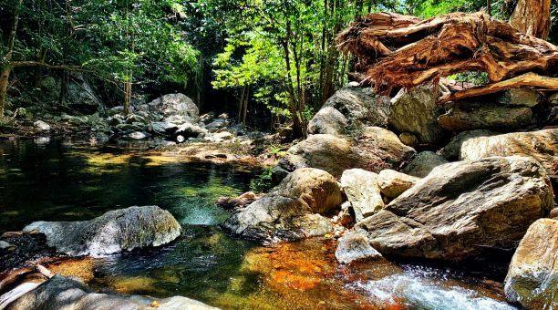 Cairns Rainforest