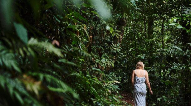Rainforest Walking Trail